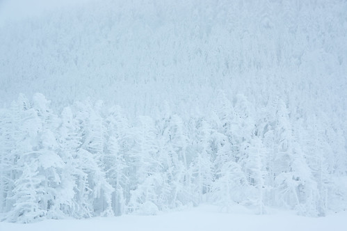 White Snow World
