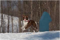 I got it..! (SergeK ) Tags: park winter dog chien brown sun white snow canon ball fun outside play whisky neige parc balle 200mm exterieur