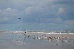 Wings and Waves. (iinvinoveritass) Tags: ocean show summer sky cloud bird beach birds clouds plane wings waves florida seagull air fl daytonabeach daytona blueangels 2012 embryriddle erau wingsandwaves2012