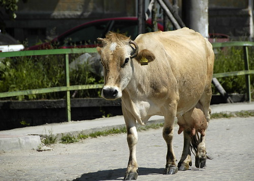 2008 Bulgarije 0768 Batak