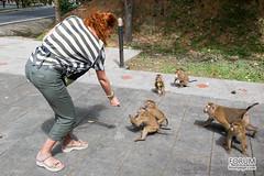 XOKA8509bs (forum.linvoyage.com) Tags: monkey girl thailand phuket outdoor animal pet jungle phuketian phuketphotographernet forumlinvoyagecom httpforumlinvoyagecom feed forest samui krabi pattaya обезьяна лес джунгли таиланд пхукет самуи краби паттая девушка корм еда