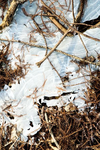 Goose Pond Cyprus Slough - January 5, 2015