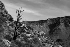 (o texano) Tags: texas desert westtexas guadalupemountainsnationalpark guadalupemountains chihuahuandesert