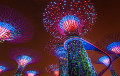 _MG_5453_web - Supertree Grove and a suspesion bridge, Singapore (AlexDROP) Tags: city travel urban color architecture night garden singapore postcard famous best scape picturesque iconic mustsee 2015 canon6d ef16354lis