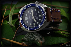Seiko Turtle SRP773 / Nature (Seb.04) Tags: wood blue brown white macro green nature leather canon leaf turtle steel watch band strap 100 mm seiko 6d montre prospex srp773k1 srp773