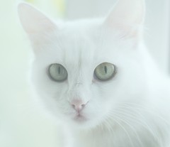 Where is soul? (mazurkevych_s) Tags: white colour cat spring kitty ukraine