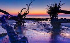 Blue Hour Dreams (Charles Opper) Tags: color beach nature water silhouette canon landscape coast spring twilight sand driftwood bluehour jekyllisland boneyardbeach