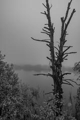 Im Regen -2 (mattis.kieffer) Tags: venn walimex 14mm hohes samyang rokinon