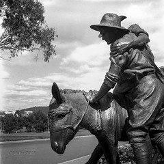 Simpson and His Donkey (Alanv 1955) Tags: australia reid australiancapitalterritory