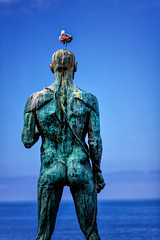 Adonis And His Seagull (galvanol) Tags: ocean blue sea portugal statue seagull bluesky madeira atlanticocean galvanol