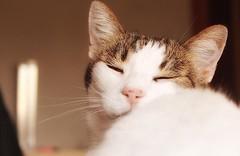 Gata durmiente (noeliaferri) Tags: pet cats pets cute love nature animal cat gatos gato gata animales lover cama mascota mascotas gatito gatas
