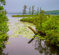 Water Logged (Catskills Photography) Tags: lake nature water reflections landscape wildlife canon1022mmlens
