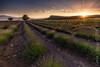 Campo de San Juan. (Carlos J. Teruel) Tags: cloud landscape atardecer photography nikon murcia cielo nubes naturalbeauty inverso 1835 filtros lavenders gnd nikon1835 campodesanjuan xaviersam carlosjteruel d800e nikonafsnikkor1835mmf3545ged