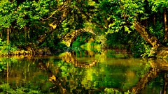 Lost in  green (Marie.L.Manzor) Tags: china asia lake bridge water forest green nature landscape reflection nikon nikon610 marielmanzor 1000favs 1000favorites 2016