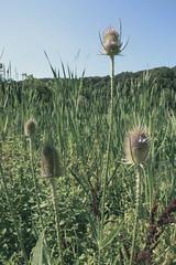 (tannerdouglass2013) Tags: pittsburgh pennsylvania nikon nikond7100 nature natgeo