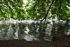 Reflektionen // Reflections (frankbehrens) Tags: schaalsee mecklenburg biospherereserve biosphrenreservat