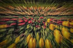 Trippin' through the tulips (BlueberryAsh) Tags: flckrfive tulipfestival tulips tulipfarm flowers colour nikond750 nikon24120