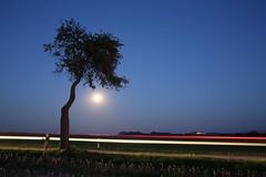 red line (Norbert Kaiser) Tags: mond vollmond mondaufgang nacht nightearth earthnight elbsandsteingebirge schsischeschweiz lilienstein festungknigstein baum aussicht moon fullmoon