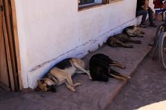 Dogs (Tomek Mrugalski) Tags: atacama chile desert dogs homeless street