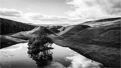 Bollihope . (wayman2011) Tags: canon50d lightroom wayman2011 bwlandscapes mono trees quarrys spoilheaps reflections pennines dales weardale bollihope countydurham uk