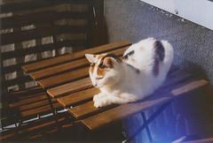 (bored now.) Tags: miez cat canonae1program film