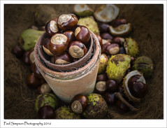 Autumn Conkers (Paul Simpson Photography) Tags: countryside autumn fall conkers nature september2016 sonya77 stilllife imageof imagesof paulsimpsonphotography photoof photosof plantpots cobwebs stilllifephotography wooden autumncolours coloursofnature colorsofnature fallcolors beautifulphotography
