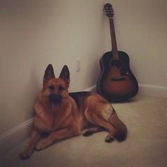 My Best Friend (Lented'oro) Tags: dog smart friend guitar shepherd best perro germanshepherd pastor k9 aleman gsd mejoramigo