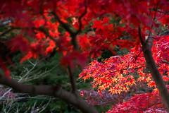 DSC_7954.jpg (d3_plus) Tags: park street autumnfoliage sky nature japan garden scenery outdoor fine sunny  streetphoto yokohama      j4   sankeien  sankeiengarden    nikon1   1nikkorvr10100mmf456 1 nikon1j4