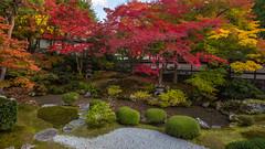 泉涌寺 (Photo_nori) Tags: autumn fall leaves japan canon garden landscape temple kyoto 日本 風景 京都市 京都府 泉涌寺 sennyuji