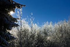 ice (frank-heinen-photographer) Tags: travel schnee winter snow cold ice nature landscape geotagged reisen natur swamp moor kalt eis landschaft bel belgien wallonie hohesvenn hautesfagnes travelreisen waimessourbrodt neuhattlich moorswamp wwwfrankheinenphotographerde geo:lat=5056298958 geo:lon=618074133