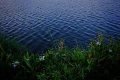 (danicayu) Tags: lake waves gingerlily