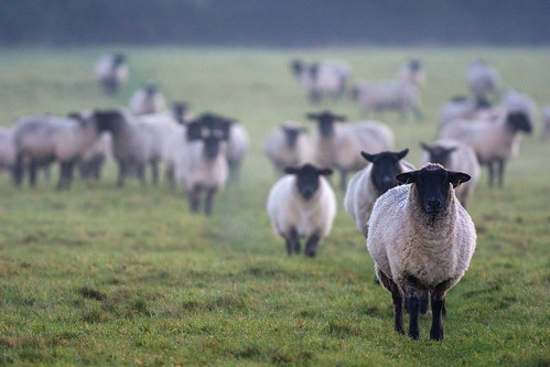 Follow the Leader, Severn Valley, Glouce by Kumweni, on Flickr