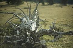 L'arbre couché (Samuel Raison) Tags: mist mountain macro montagne landscape paysage vercors brouillard hautsplateauxduvercors nikon2880200mmafd nikon41635mmafsgvr nikon2860mmmicroaf nikon1450mmaf
