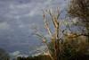 suppliant (domiloui) Tags: nature clouds jaune automne flickr ciel arbres lumiere nuage nuages paysage lorraine campagne arbre couleur ambiance lothringen cooliris meurtheetmoselle nomeny abaucourt blinkagain