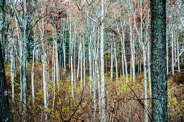 Ferdinand State Forest - November 8, 2014