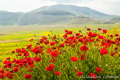 Landscape of Piano di Castelluccio (clodio61) Tags: road park flowers red summer italy panorama mountain color green nature field animal horizontal rural landscape photography town italian europe day afternoon village view sheep natural outdoor path country hill flock meadow culture panoramic pasture poppies land agriculture herd perugia umbria appennino norcia castelluccio sibillini