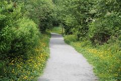2014 May 27 Tynehead 3171 (digitalmarbles) Tags: trees canada bc britishcolumbia bushes pathway surreybc