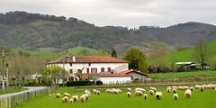 Sheep farm, Basque Country, Pyrnes Atlantiques, France (edk7) Tags: old france building 2004 architecture farmhouse rural sheep farm hill structure pasture euskadi basquecountry aquitaine nikoncoolpix4500 pyrnesatlantiques edk7