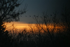 in the morning (mariola aga ~ slowing down) Tags: morning trees birds sunrise dawn twilight branches flock flight thegalaxy