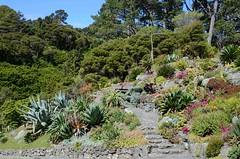 Jardin botanique de Wellington