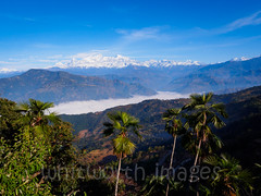 View to Manasalu from Gorkha (whitworth images) Tags: trees nepal cloud mist mountains nature beauty fog landscape asia view lookout snowcapped ridge himalaya viewpoint himalayas gorkha indiansubcontinent tanahun manasalu