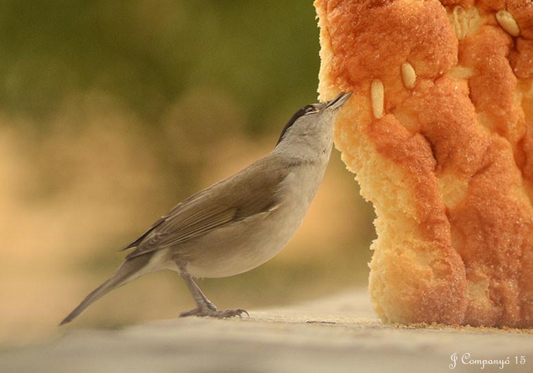 Loja de ornitologia online dating