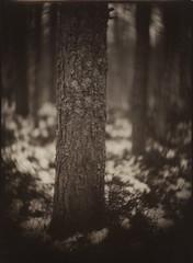Karjala (NooFZz) Tags: bw landscape swirl largeformat 9x12 photographicpaper petzval paperpositive bulldog4x5