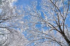 雪景色 (bamboo_sasa) Tags: winter snow japan forest 日本 雪 冬