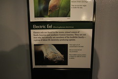 Electric Eel sign (cmlburnett) Tags: fish sign electric aquarium pittsburgh pennsylvania pittsburghzoo eel ppg electriceel ppgaquarium electrophorus electricus pittsburghpennsylvania electrophoruselectricus knifefish electricfish