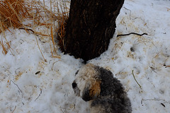 camouflage -0631 (blairware) Tags: winter guelph chuffer