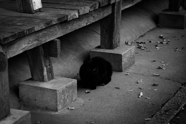 Today's Cat@2014-12-30