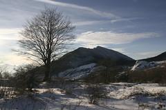 passeggiata sulla neve (tammaro alessandra) Tags: neve monte albero matese passeggiata mutra
