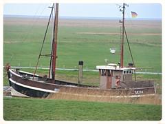 SKUA (v8dub) Tags: germany deutschland boat bateau neufeld allemagne schiff skua niedersachsen