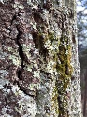 Nature's Bark
